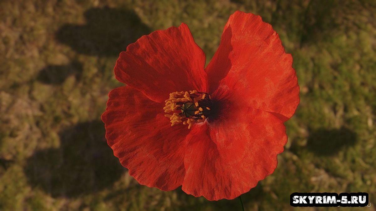 Красный мак от Renthal311Моды Скайрим > Прочее Скайрим