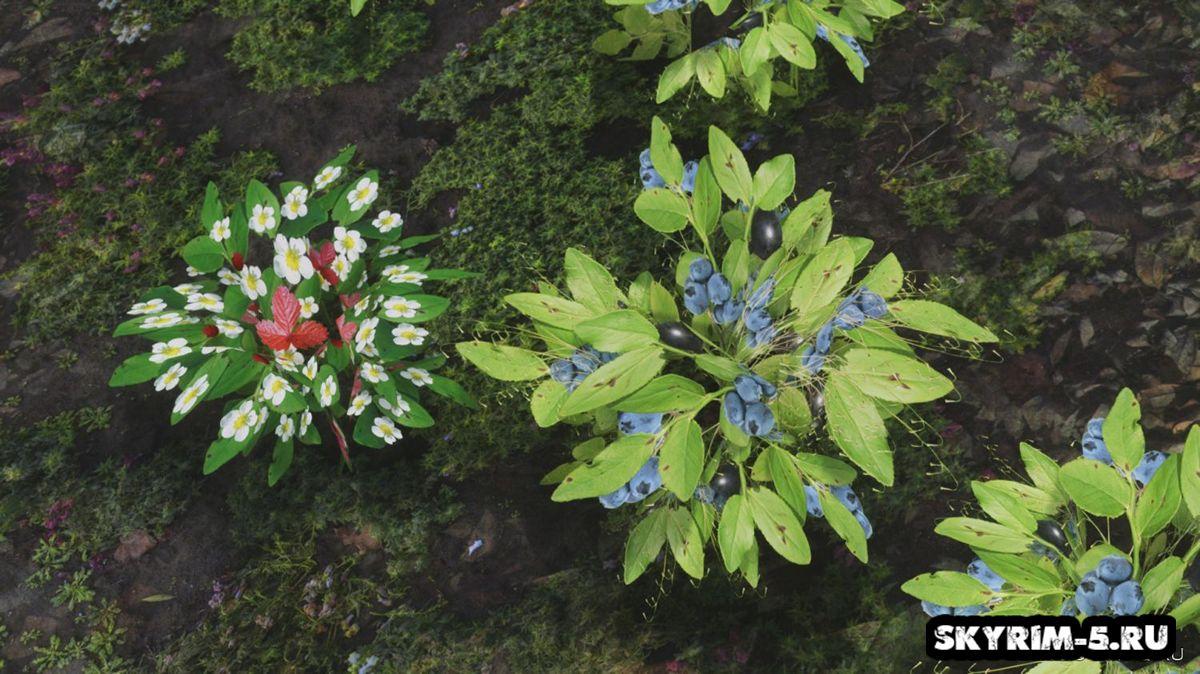 Лесные ягодные кусты -