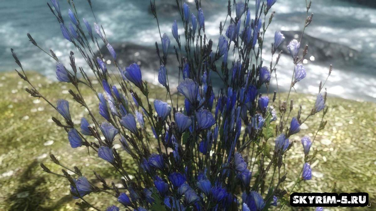 HD синий горный цветок -