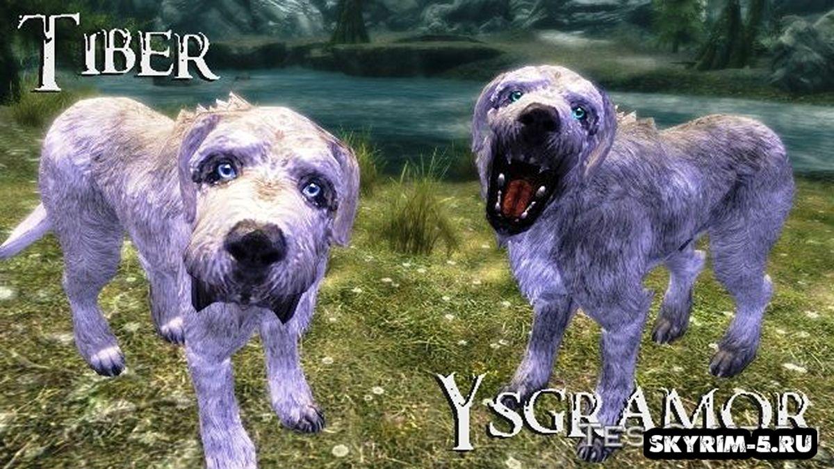 Уникальные собаки -