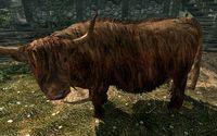 Животные в Скайрим описание и характеристики -
